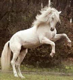 White_Stallion