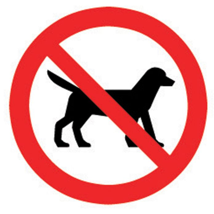 No dogs on campus