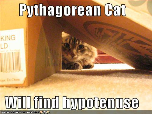 Pythagorean Cat Will find hypotenuse