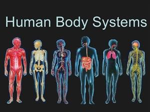 Human Body Sysstems