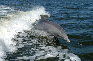 my dolphin