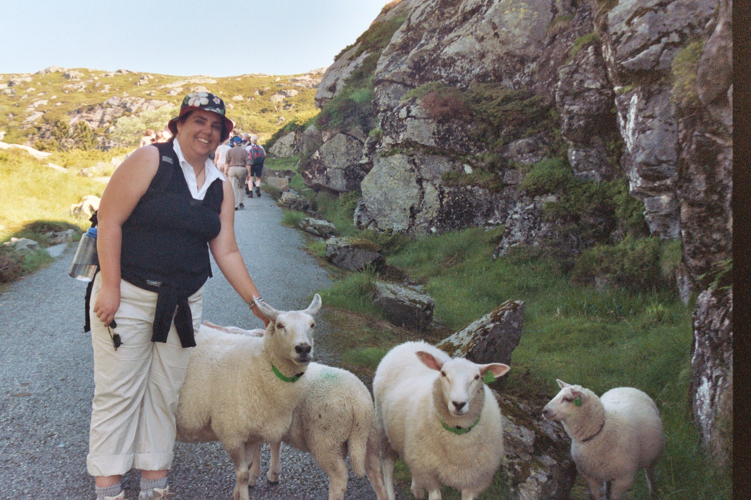 Me petting sheep in Norway
