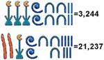 Egyptian Math